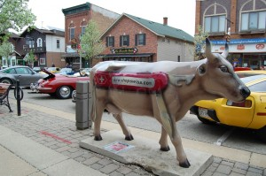Cars and Cows in New Glarus, Wis.