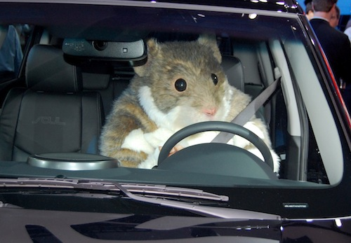 A Kia Hamster